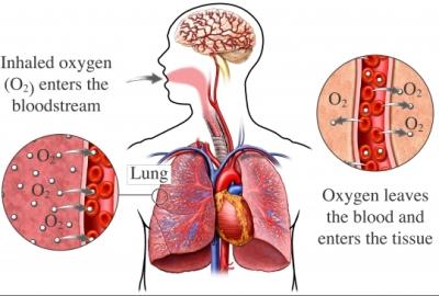 cbd oxygen
